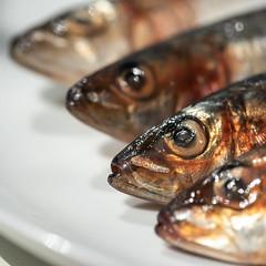 MM - Gone Fishing (belincs) Tags: gonefishing lincolnshire macromondays macro 2019 uk july