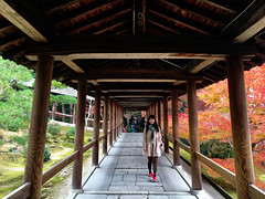 500px Photo ID: 133540487 (DaDa 1127) Tags: amazing autumn beautiful beauty color colorimage colorful dress fall flower forest girl green japan kyoto leaf leaves light red symmetrical symmetry travel tree trees winter wood yellow 京都 對稱 東福寺
