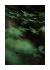 #SONY #ILCE7M2 #SONYILCE7M2 #a7ii #50mm #lomography #lomoartlens #newJupiter3 #TOKYO #SONYcamera #Photo #photographer #単焦点 #iso800 #NDfilter #light #shadow #自然 #Nature #玉ボケ #bokeh #Depthoffield #Naturephotography #Art #photography #Japan #earth #Asia (shin ikegami) Tags: sony ilce7m2 sonyilce7m2 a7ii 50mm lomography lomoartlens newjupiter3 tokyo sonycamera photo photographer 単焦点 iso800 ndfilter light shadow 自然 nature 玉ボケ bokeh depthoffield naturephotography art photography japan earth asia