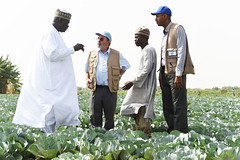24874_1074 (FAO News) Tags: maiduguri nigeria fao africa travels