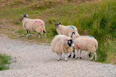 The Lake District, Latrigg (Deirdre Gregg) Tags: lakes lake district keswick windermere ambleside grasmere july 2019 stone kirkstone ullswater bowder centenary