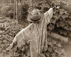 Scarecrow (DayBreak.Images) Tags: suburban atlanta georgia gwinnettcounty lilburn garden scarecrow canondslr canoneflens lightroom bw sepia