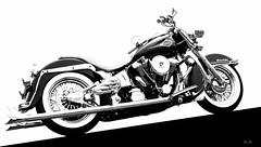inclined... (Stu Bo - Tks for 13 million views) Tags: motorcycle harleydavidson beautiful blackandwhite bw chromeisking sbimageworks sexonwheels icon idreamofcarsmotorsandhorsepower bike ride rebel reflections highkey