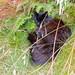 20190722 Sovande katt i gräset