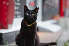 猫 (fumi*23) Tags: ilce7rm3 sony street sel85f18 85mm fe85mmf18 a7r3 animal cat gato neko emount ねこ 猫 ソニー bokeh