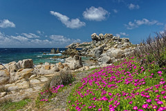 Sardinian spring (Tjaldur66) Tags: coast sea seashore rocks rockformation spring springcolours blossoming italy mediterranean sardinia outdoor travel exploring