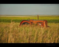 consumption (Gordon Hunter) Tags: old abandoned orange tractor farm equipment tall grass crop field canola yellow prairies flat sk canada gordon hunter vintage country rural nikon d5000