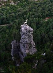 Cabra Loca (candi...) Tags: montaña escultura cabra parcnaturaldelsports naturaleza nature arboles airelibre
