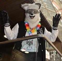 Londonfurs Summer 2019 141 (finbarzapek / SeanC) Tags: londonfurs summer weekender july 2019 fursuit fursuits furry furries animal costumes london united kingdom
