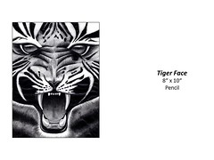 """Tiger Face • <a style=""""font-size:0.8em;"""" href=""""http://www.flickr.com/photos/124378531@N04/48347959001/"""" target=""""_blank"""">View on Flickr</a>"""