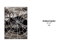 """Redback Spider • <a style=""""font-size:0.8em;"""" href=""""http://www.flickr.com/photos/124378531@N04/48347959221/"""" target=""""_blank"""">View on Flickr</a>"""
