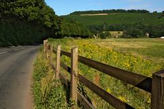 Sunday Afternoon Bike Ride (elhawk) Tags: ragwort wyevalley wildflowers saveourwildflowers wildverge wildfieldmargin