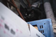 猫 (fumi*23) Tags: ilce7rm3 sony sel85f18 emount 85mm fe85mmf18 a7r3 animal cat katze neko kitten ねこ 猫 ソニー