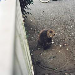 DH000012 (Architecamera) Tags: film lomo800 snap color cat street