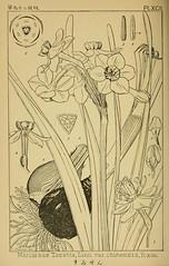 n459_w1150 (BioDivLibrary) Tags: japan pictorialworks plants pteridophyta spermatophyta newyorkbotanicalgardenluesthertmertzlibrary bhl:page=36318979 dc:identifier=httpsbiodiversitylibraryorgpage36318979