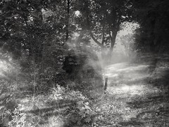 Early morning (wojciechpolewski) Tags: morning foggyweather foggymorning fog sunlight blackandwhitenature blanconegro blackwhite photos photo