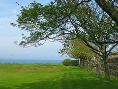 Mystery tree @ St. Andrews (2 of 2) (jimsawthat) Tags: mystery tree unknown uk unitedkingdom scotland smalltown standrews