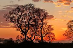 Pantanal_1851 (Jimmy Vangenechten 76) Tags: geo:lat=1675881000 geo:lon=5687628345 geotagged brazilië brazil pantanal poconé matogrosso estradatranspantaneira transpantaneirahighway mt060rodoviatranspantaneira microrregiãodoaltopantanal mesorregiãocentrosulmatogrossense centralwestregion southwildpantanallodge landschap landscape scenic scenery zonsopgang