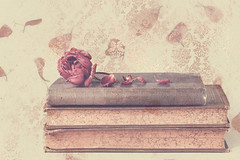 Petals (Anikó Lázár) Tags: petals rose dried flower books stilllife textured paper goldenrose vintage 50mm