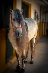 Just waiting (Freddy Juhl) Tags: equine clubhipicoelranchito spain2019 animal animals art background beautiful beauty big black blue brown close closeup color courage cute domestic dust equestrian eye face farm ferocious field fineart fun green hair happy head horse horses lifestyle light mammal mane natural nature one outdoor outside people portrait portraits power purebred race red sky stallion stallions summer texture white wild young