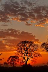 Pantanal_1864 (Jimmy Vangenechten 76) Tags: geo:lat=1675892054 geo:lon=5687609138 geotagged brazilië brazil pantanal poconé matogrosso estradatranspantaneira transpantaneirahighway mt060rodoviatranspantaneira microrregiãodoaltopantanal mesorregiãocentrosulmatogrossense centralwestregion southwildpantanallodge landschap landscape scenic scenery zonsopgang