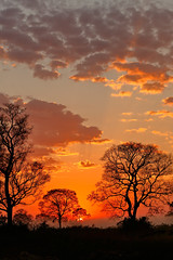 Pantanal_1854 (Jimmy Vangenechten 76) Tags: geo:lat=1675887063 geo:lon=5687624379 geotagged brazilië brazil pantanal poconé matogrosso estradatranspantaneira transpantaneirahighway mt060rodoviatranspantaneira microrregiãodoaltopantanal mesorregiãocentrosulmatogrossense centralwestregion southwildpantanallodge landschap landscape scenic scenery zonsopgang