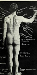 This image is taken from Landmarks and surface markings of the human body (Medical Heritage Library, Inc.) Tags: anatomy regional surgical topographical wellcomelibrary ukmhl medicalheritagelibrary europeanlibraries date1912 idb28977956