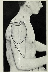This image is taken from Page 46 of Landmarks and surface markings of the human body (Medical Heritage Library, Inc.) Tags: anatomy regional surgical topographical wellcomelibrary ukmhl medicalheritagelibrary europeanlibraries date1912 idb28977956