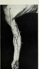 This image is taken from Page 29 of Landmarks and surface markings of the human body (Medical Heritage Library, Inc.) Tags: anatomy regional surgical topographical wellcomelibrary ukmhl medicalheritagelibrary europeanlibraries date1912 idb28977956