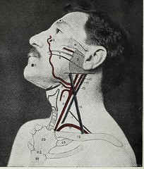 This image is taken from Page 16 of Landmarks and surface markings of the human body (Medical Heritage Library, Inc.) Tags: anatomy regional surgical topographical wellcomelibrary ukmhl medicalheritagelibrary europeanlibraries date1912 idb28977956
