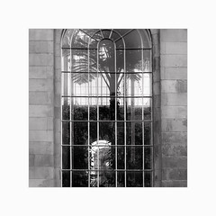 Linked In (Frans van Hoogstraten) Tags: edinburgh royalbotanicgarden botanic greenhouse fransvanhoogstraten garden window palmhouse summilux28mm