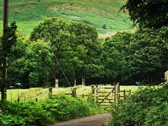 Love these little gates out in the countryside. Forest of Bowland in Lancashire (janettehall532) Tags: gates countrysideviews countrysidelandscape countrysidephotography countryside naturephotography nature beautiful july summer photography photographylovers photo lancashire uk unitedkingdom greatbritain lovenature naturelovers beautyinnature northwestengland huaweip30pro huawei flickr flickrcentral forestofbowland troughofbowland