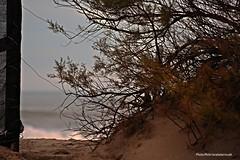 Puerta al mar. (Aprehendiz-Ana Lía) Tags: luz mar flickr nikon esperanza olas atardecer naturaleza nature arena puerta dunas ramsar argentina marchiquito humedal unesco reserva ramas tamarisco hojas invierno imagen color analialarroude tamarixramosissima coronelvidal cielo