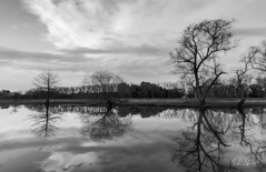 _LS_0895-1 (Paio S.) Tags: river clouds reflections mirror bw blackandwhite monochrome trees landscape simetry outdoors campo estancia