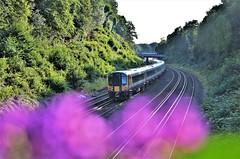 444034 (stavioni) Tags: class444 444044 444034 swt swr south west trains western railway emu electric multiple unit rail train siemens desiro