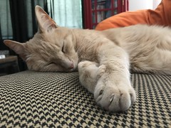 IMG_1687 (Jeffrey Terranova) Tags: apple iphone 7plus ginger the cat avenel nj new jersey