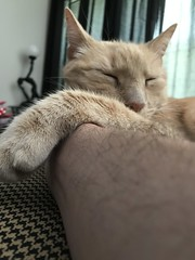 IMG_1681 (Jeffrey Terranova) Tags: apple iphone 7plus ginger the cat avenel nj new jersey