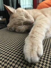 IMG_1690 (Jeffrey Terranova) Tags: apple iphone 7plus ginger the cat avenel nj new jersey