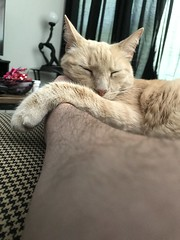 IMG_1682 (Jeffrey Terranova) Tags: apple iphone 7plus ginger the cat avenel nj new jersey