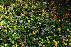 Little Summer Flowers (gerard eder) Tags: world reise travel viajes europa europe españa spain spanien natur nature naturaleza flowers flores flora blumen green park parque outdoor valencia