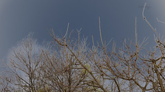 Bare (Greenstone Girl) Tags: bare trees grey winter branches tangle sky