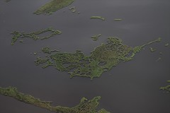 Marshes dying from climate change and sea level rise. Drowning. (Healthy Gulf) Tags: barry terrebonne wetlandskilledbyclimate drownedwetlands sealeverise wetlands marshes