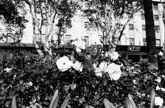 img624-Editar (Buenos Aires loucoporanalogicas) Tags: pentax asahi sp cinerex 50 rebobinado vencido e danificado overdue damaged rewind micro centro buenos aires