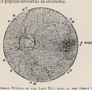 This image is taken from Page 95 of Text-book of ophthalmology