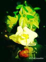 Flower Macro (Stephenie DeKouadio) Tags: art artistic abstract abstractart abstractflower abstractflowers flowersabstract flowerabstract macroabstract darkandlight light colorful macropainting painting flowerspainting flowerpainting