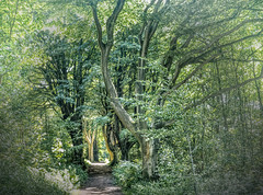 TunnelThroughTheGreatWood(Stanmer) (iankellybn26dj) Tags: uk england stanmer sussex forest woods woodland path track mysterious mystic wicca nature natural landscape