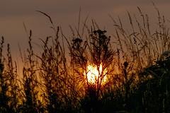 Sunset (lightersideofdark) Tags: