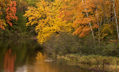 At the River Bend (maryanne.pfitz) Tags: landscape nature autumn fall foliage river reflections manitowishwaters wisconsin vilascounty manitowishriver map9818 maryannepfitzinger
