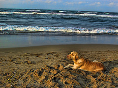 until you come back (ingcuevas) Tags: sand ocean sea landscape dog companion sad thinking beach vacations blue sky nature warmth warm cute beautiful inspiration vibrant colorful colors gold melancholy melancolia dorado mar arena cielo hermoso playa recuerdos nubes clouds