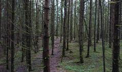 Lagnes (mtbboy1993) Tags: langnes forest trail sti askim indreøstfold østfold norge norway roots trees opencamera rawtherapee